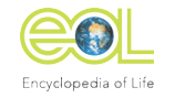 Encyclopedia of Life Logo